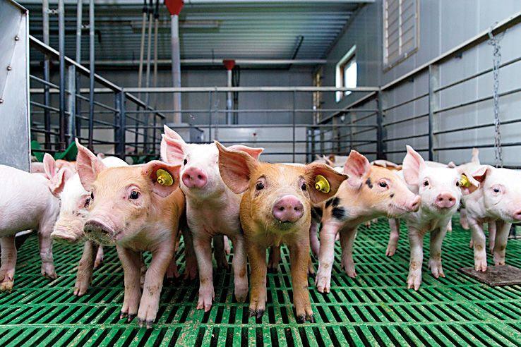 Costa Food Group integra las marcas Piensos Costa, Costa Food Meat, Casademont e Industrias  ...