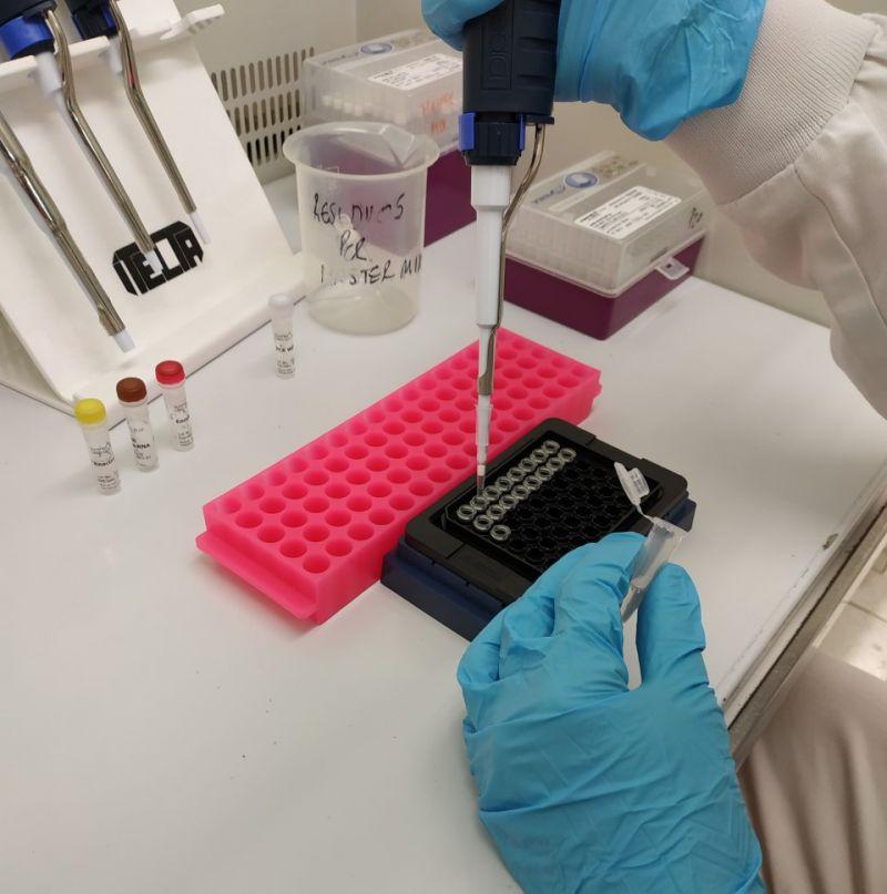 Detección mediante PCR